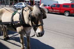 Pony in Skagway.jpg