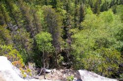 Trees in Skagway.jpg